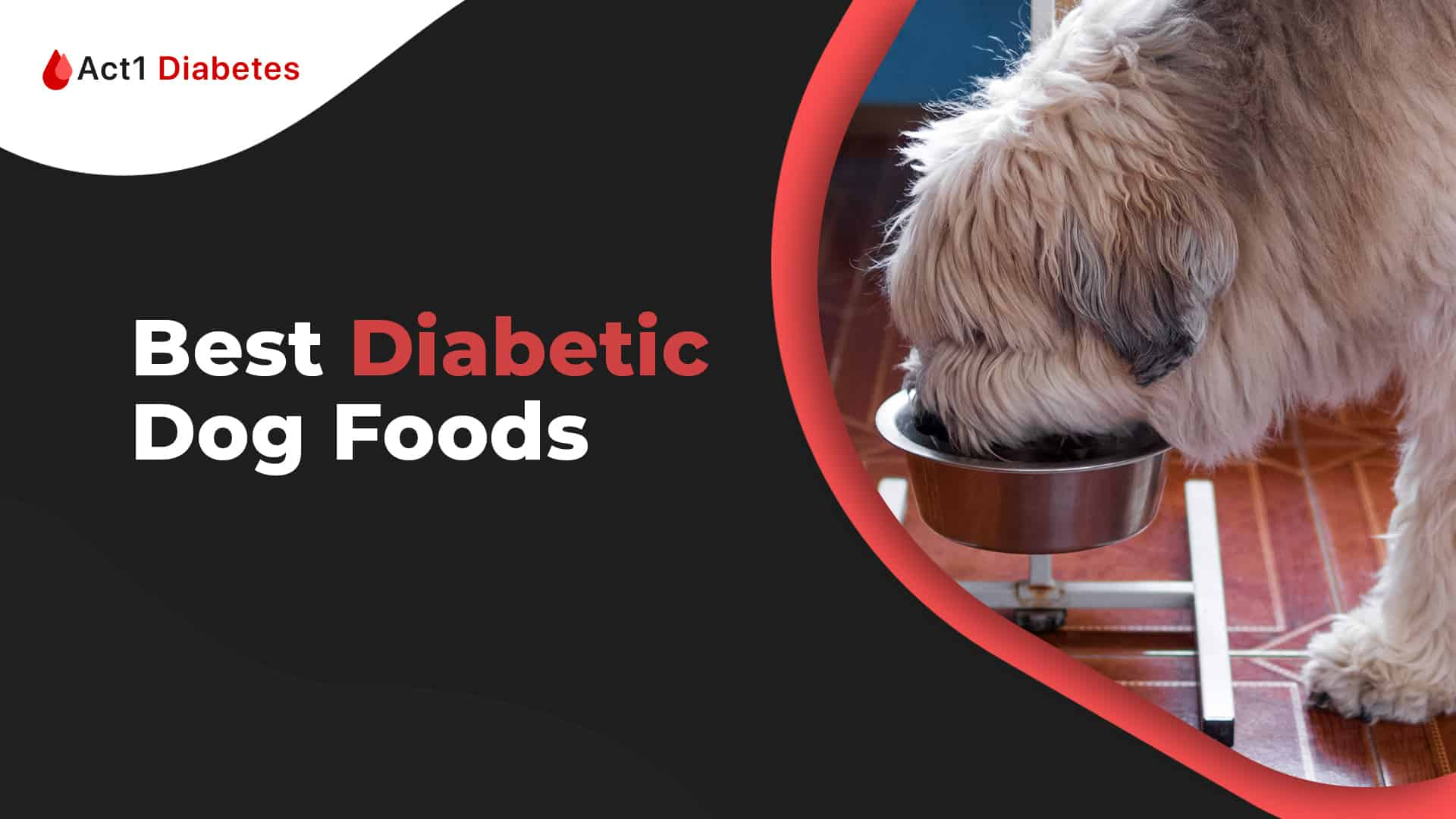 best dog foods for diabetic dogs